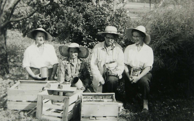 Group of Women Picking Strawberries